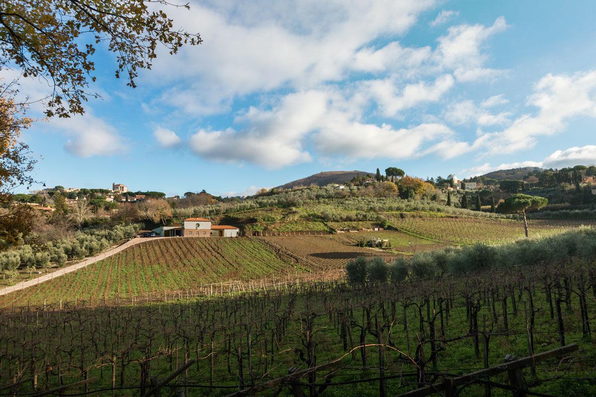 Ribelà wineyard