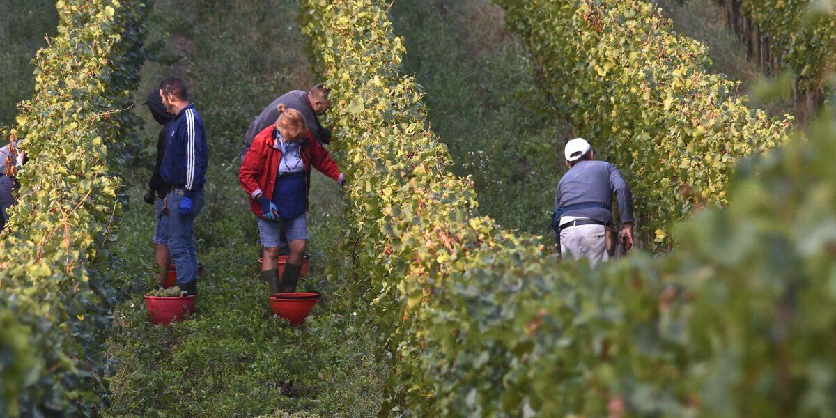 Alois Lageder wine yards
