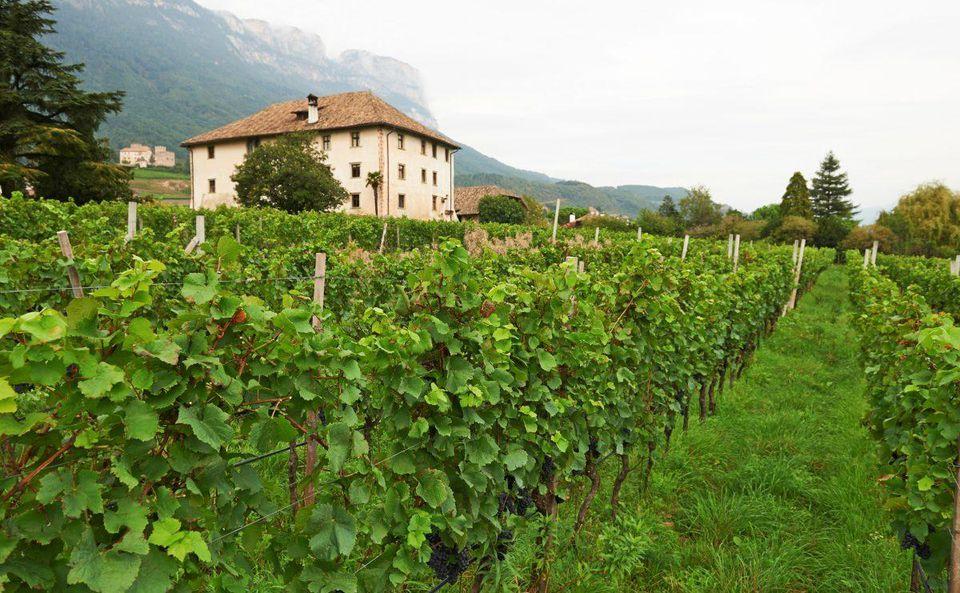 Alois Lageder wines