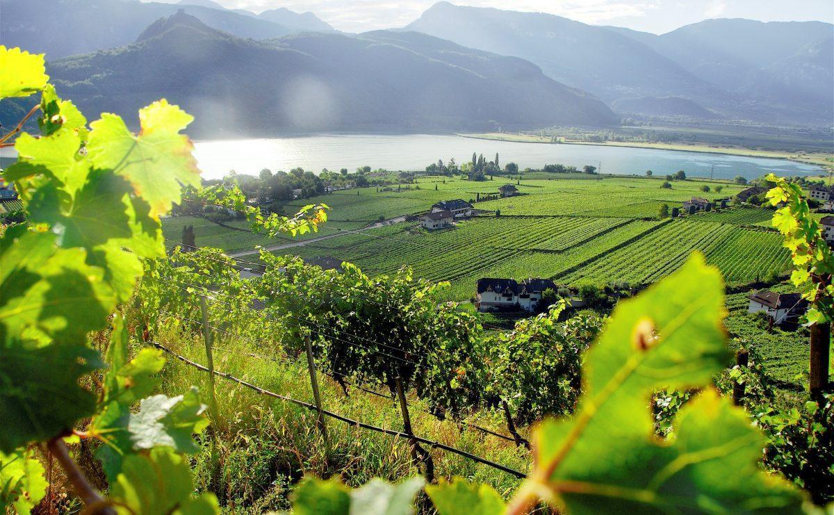 alois lageder winery