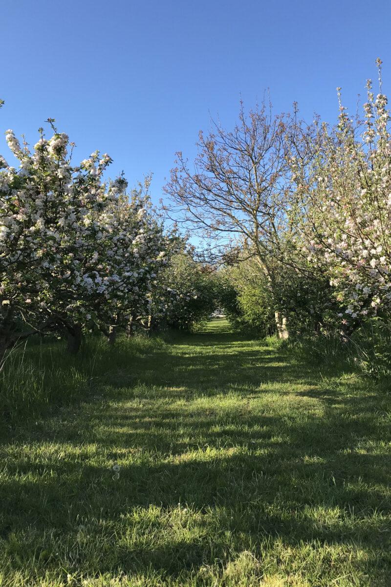 Birkemosegaard Organic farm