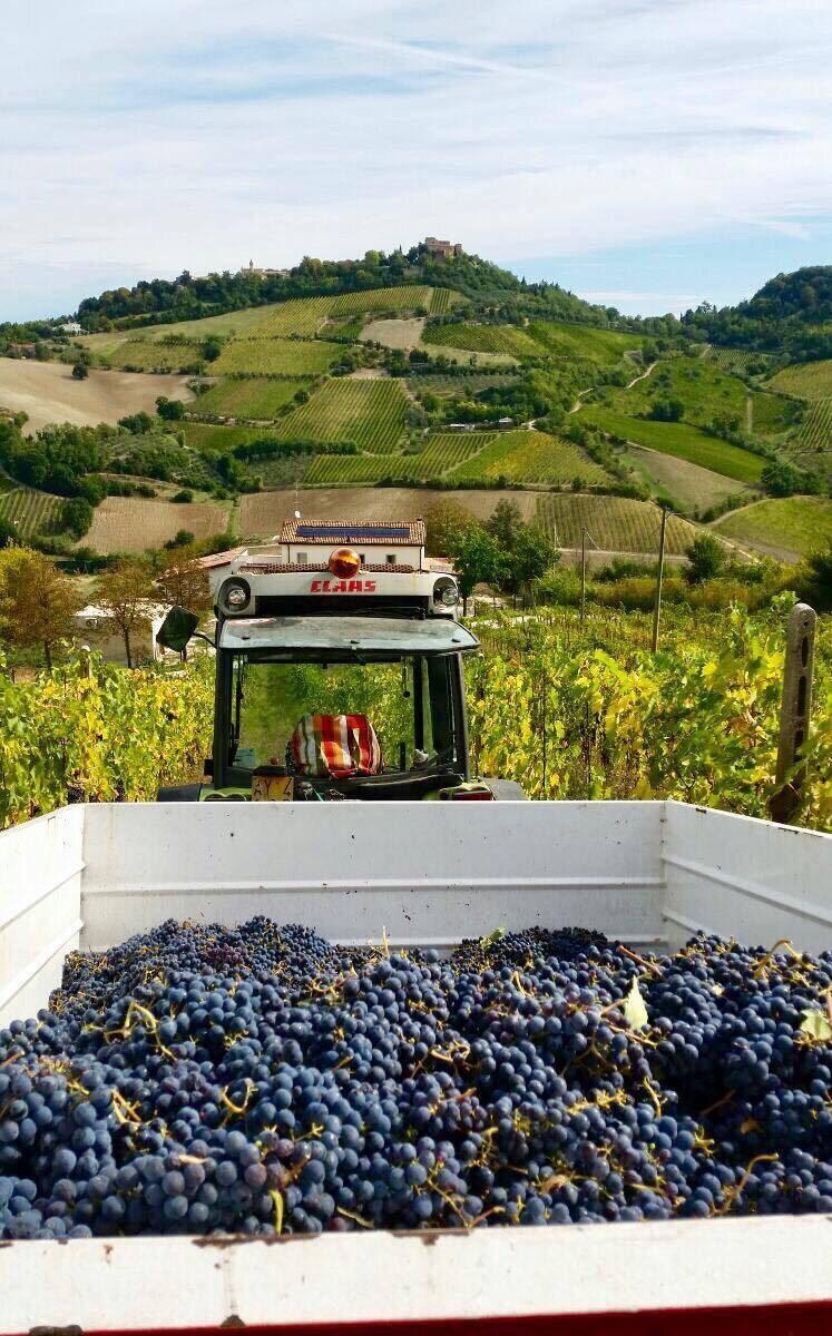 Diavolettto Winery