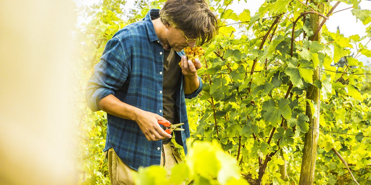 I Clivi Winery – Kaataa